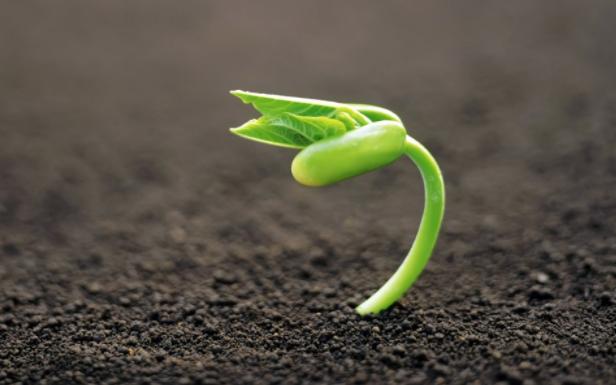 Somos semilla...